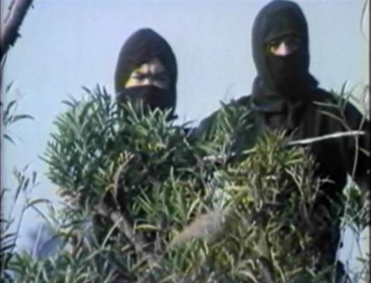 ninjas spying in bushes