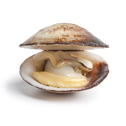 Black Mass: A Film That's Actually About Shellfish ... Open Clam