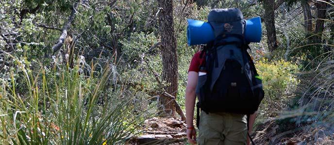 backpacker facing woods